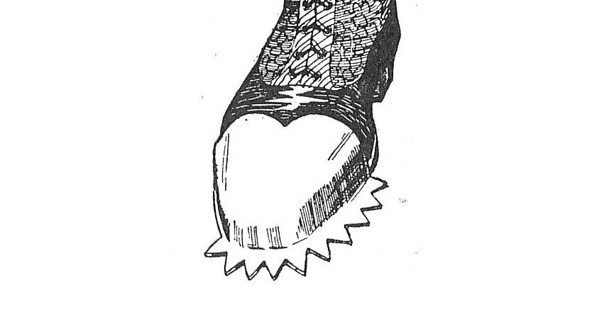 Cresta Shoe